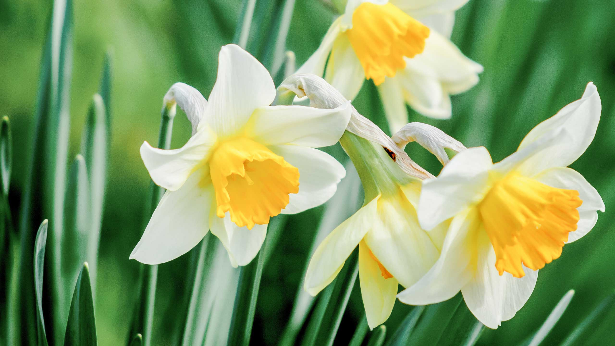 Growers Guide Fall Bulbs Mulhalls