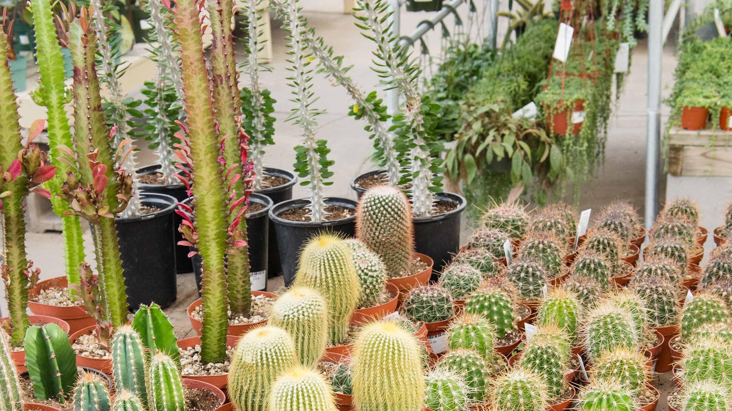 endearing house plants types. Cacti 5 Indoor Plants You Can Get and Almost Forget Mulhall s  endearing house plants types The Best 100 Endearing House Types Image Collections www