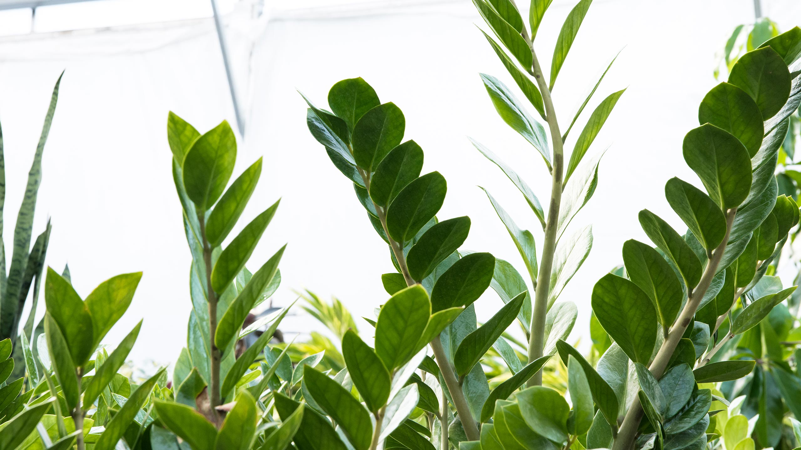 endearing house plants types. ZZ Plant 5 Indoor Plants You Can Get and  Almost Forget Mulhall s