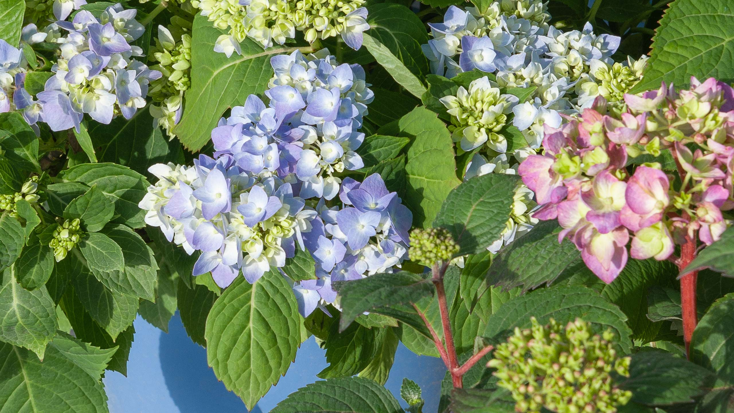 Endless Blooms For Your Landscape Mulhall S