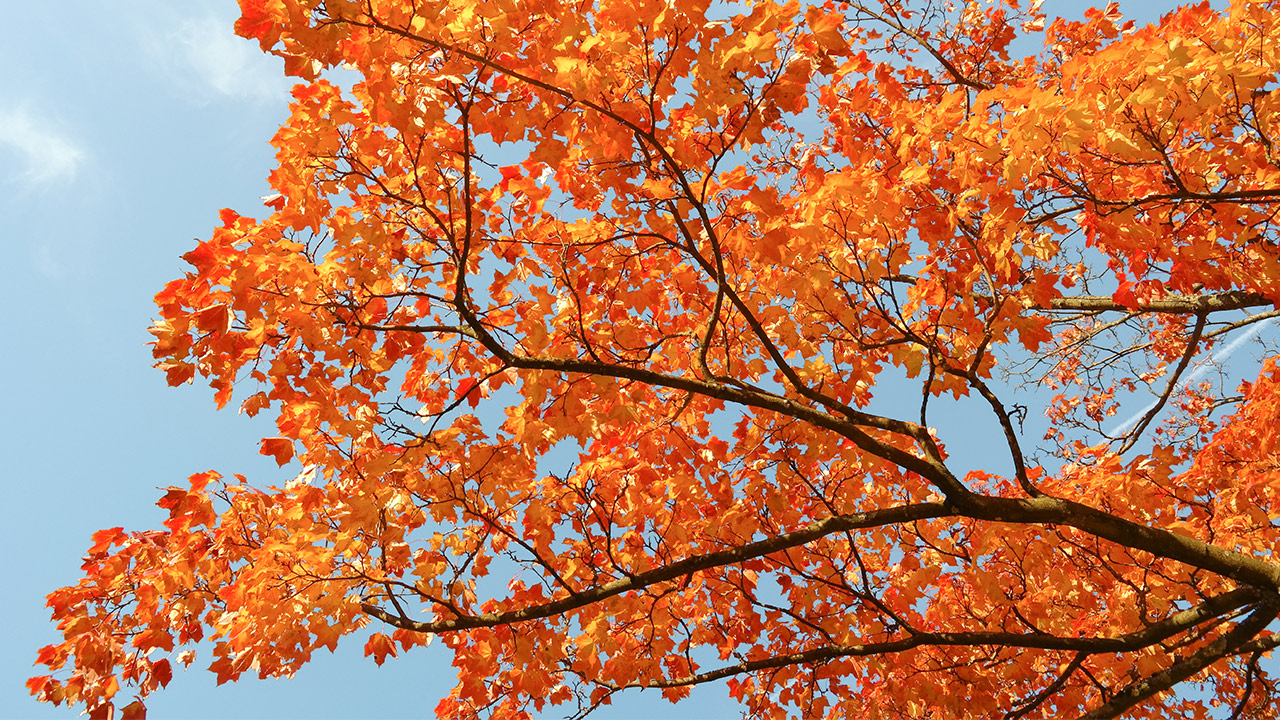 Trees Shrubs For Blazing Fall Color Mulhall S