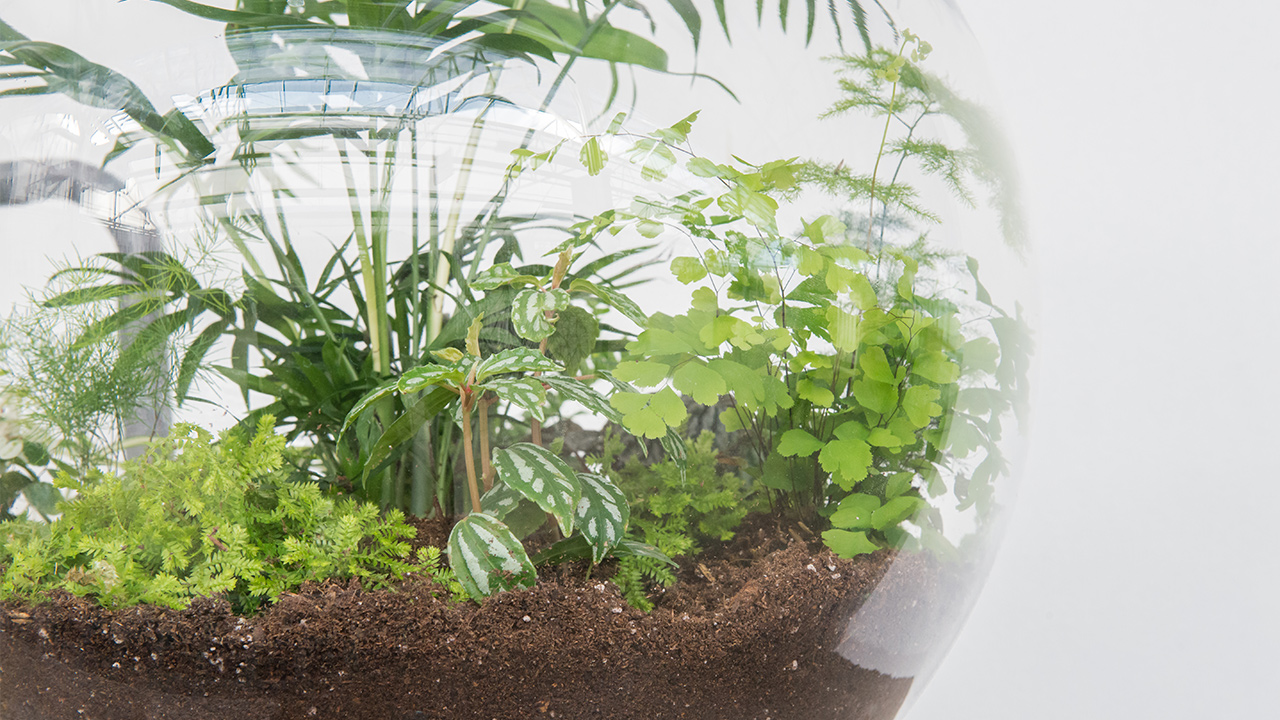 How To Build Your Own Terrarium Mulhall S