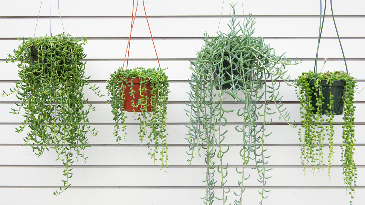 Our Favorite Hanging Houseplants