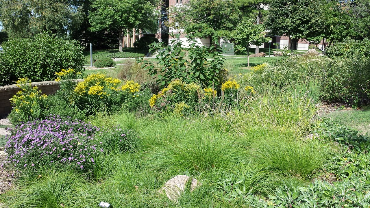 The Why How Of Rain Gardens Mulhall S