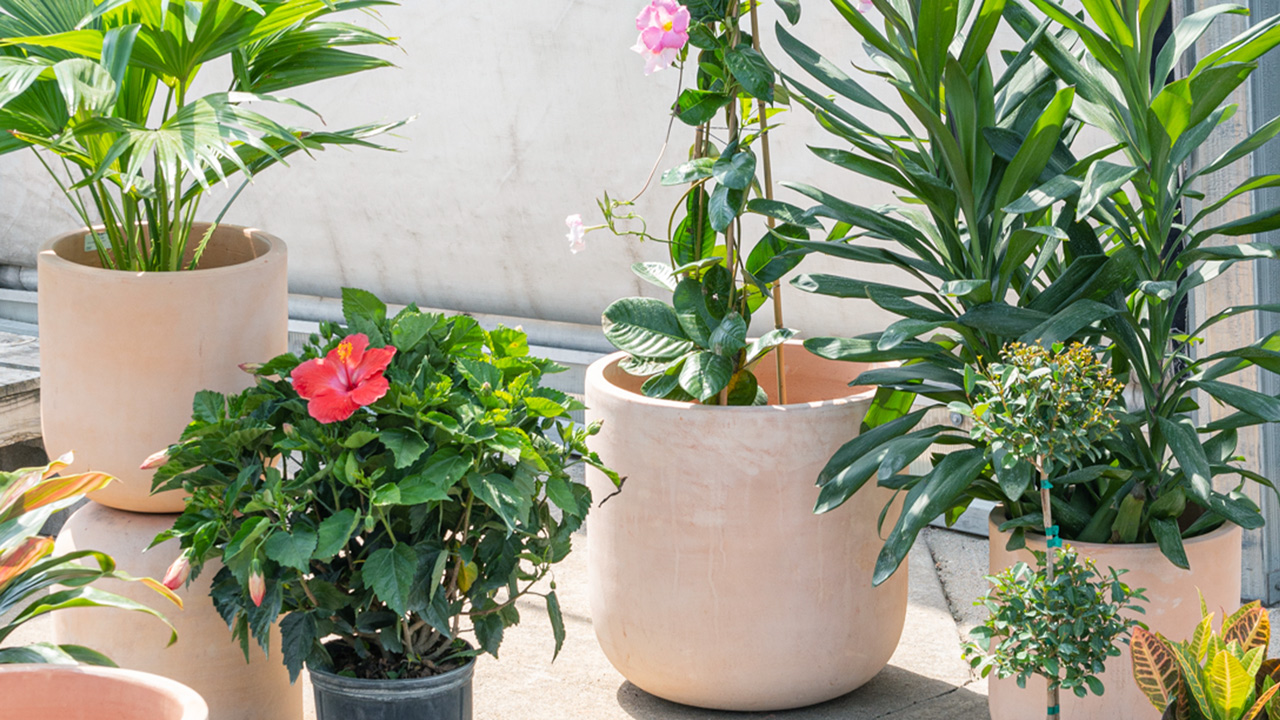 Our Favorite Plants For The Patio Mulhall S
